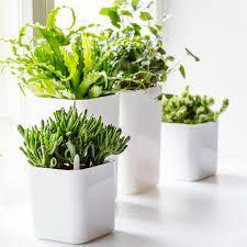 Eva Solo Self Watering Herb Pots - Google Search