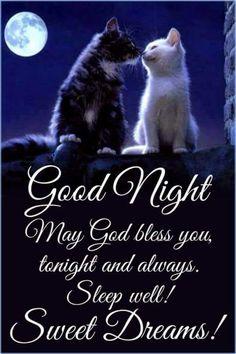 Good Night Cat, Good Night Thoughts, Good Night I Love You, Beautiful Good Night Images, Good Night Sweet Dreams, Goid Night, Nights Into Dreams, New Good Night Images, Good Night Love Messages
