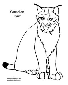 baby lynx coloring pages - photo#21