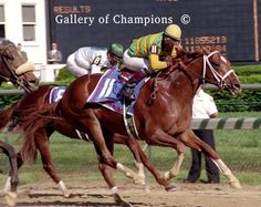 Charismatic (March 13, 1996)Thoroughbred chestnut stallion sired by Summer Squall, and is known as one of the closest challengers to the Triple Crown of Thoroughbred Racing since the last winner, Affirmed, accomplished the feat in 1978. Winner of the 1999 Kentucky Derby