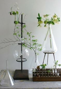 95 best nature environment images on pinterest floral this would be interesting decor for a wedding reception vintage glass science beakers and test tubes as vases fandeluxe Gallery