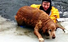 Dramatic Rescues Remind Us To Keep Animals Off The Ice | Care2 Causes