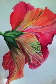 Watercolor Hibiscus by Viarae on DeviantArt