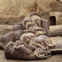 That is one big otter pile - April 18, 2018
