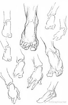 drawing feet and toes, foot anatomy for artists