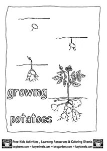 Growing Potatoes colouring page. #GYOP Grow Your Own Potatoes Worksheet