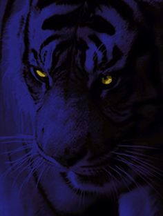 Rekkus The black tiger at night Animals And Pets, Funny Animals, Cute Animals, Tiger Art, Tiger Tiger, Tiger Poster, Huawei Wallpapers, Glow Paint, Black Tigers