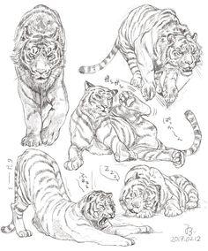 Animal Sketches, Art Drawings Sketches, Animal Drawings, Cool Drawings, Big Cats Art, Furry Art, Cat Art, Tiger Drawing, Tiger Art