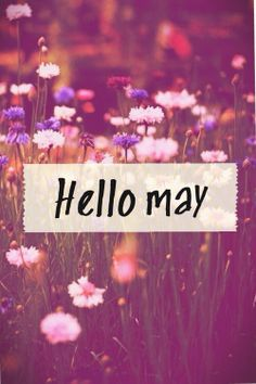 80 Hello May Quotes And Sayings To Bring In The Wonderful, colorful and warm month. Enjoy these quotes for a new month and love another great may! May Month Quotes, Hello May Quotes, Days And Months, Months In A Year, 12 Months, Spring Song, Spring Time, Spring Months, New Month Wishes