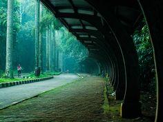 ragunan zoo, Jakarta, Indonesia