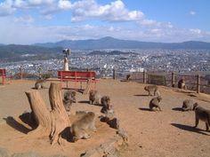 Iwatayama Monkey Park, Kyoto Japan