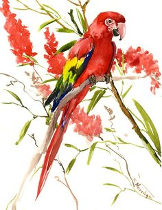 Scarlet Macaw, Original watercolor painting bright colored art, 14 x 11 in, bright red scarlet rainbow colors tropical bird tropical foliage by ORIGINALONLY on Etsy