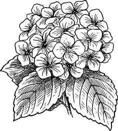 9 Vector Hydrangea Flower Images