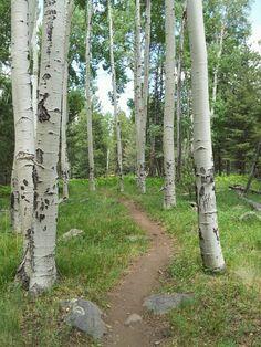 Arizona Trail near Flagstaff