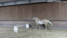 *Chill, no horses or humans were harmed in the making of these gifs.