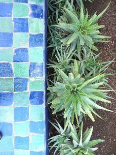Gardens in Morocco | Majorelle Gardens detail