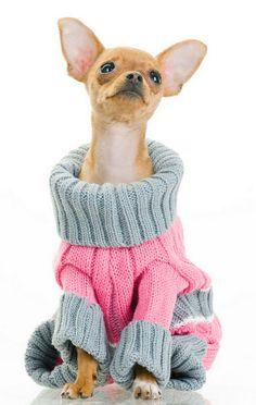 fashion dog - Cerca con Google