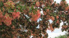 Día del Árbol: cinco especies nativas de Córdoba para admirar y plantar | Noticias al instante desde LAVOZ.com.ar | La Voz