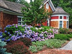 15 of the Best Low-Maintenance Shrubs Backyard Garden Landscape, Small Backyard Gardens, Garden Shrubs, Backyard Patio, Front Gardens, Shade Garden, Landscaping Shrubs, Tropical Landscaping, Front Yard Landscaping