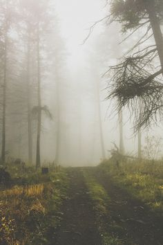 i love to hike in the fog... looking forward to it this fall.