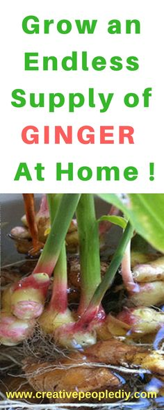 Grow an Endless Supply of Ginger at Home !!!