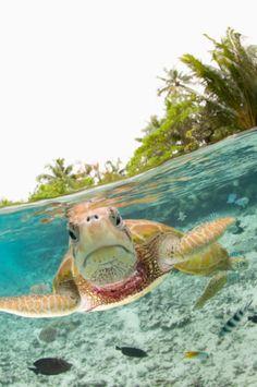 Turtle. I love his grumpy little face!