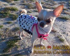 camisetas para perros, moda canina