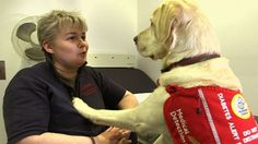 Magic the dog is able to detect dangerous shifts in his owner's blood sugar levels while she sleeps.