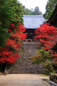 京都の紅葉は高雄からと言われる神護寺の紅葉