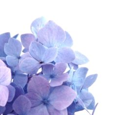 Hydrangeas are my favorite :)