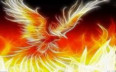 Image result for phoenix fire bird drawing