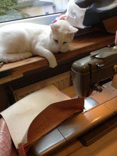 My boss  #cat #leather bag