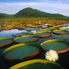 Pantanal (Brasile-Bolivia-Paraguay)
