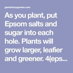 As you plant, put Epsom salts and sugar into each hole. Plants will grow larger, leafier and greener. 4(epsom salts) to 1(sugar) ratio....