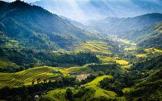 Scarica sfondi Giang province, Vietnam, montagne, campi di riso, 4k, foresta, paesaggio di montagna