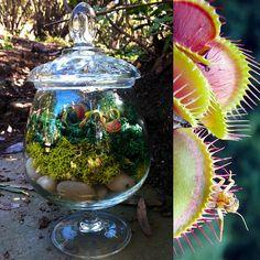 Carnivorous plant terrarium