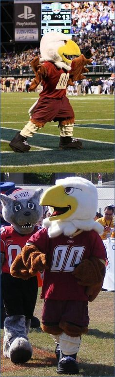 """Boston College Eagles mascot.     The mascot officially got the name """"Baldwin"""" -- a combination of the words """"Bald"""" (as in bald eagle) and """"win."""""""