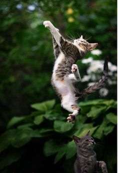 Beautiful jump of a cute cat... to see more click on picture