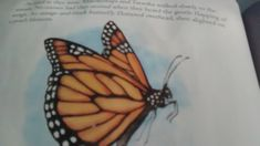 this is the butterfly that help revolve the argument between elk in the the story who own the land by A. Children Images, Elk, No Response, Butterfly, Moose, Butterflies