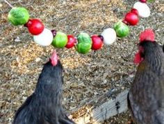 Boredom during the cold months can lead to pecking and other issues within your flock. Cure the winter blahs with edible vegetable garlands for your chickens! Best Egg Laying Chickens, Raising Backyard Chickens, Keeping Chickens, Laying Hens, Cheap Chicken Coops, Portable Chicken Coop, Chicken Swing, Chicken Life, Small Chicken