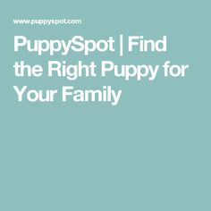 PuppySpot | Find the Right Puppy for Your Family