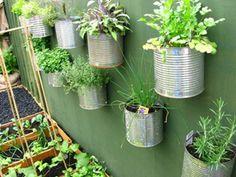 faire pousser des plantes aromatiques a l interieur
