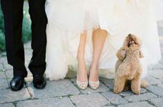 Hond op je bruiloft - Leuke trouwfoto's gegarandeerd | ThePerfectWedding.nl
