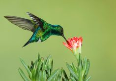 How do you know when to put the humming bird feeders out? You have so many choices in hummingbird feeders from those made from plastic, glass and ceramics. National Geographic Animals, Attractive Wallpapers, Hummingbird Pictures, Hope Is The Thing With Feathers, Rare Birds, Humming Bird Feeders, Kids Events, Beautiful Birds, Good News