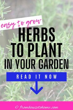 Great list of easy to grow herbs! I love all the tips for planting them in your garden and the recipe suggestions that use the herbs like parsley, oregano, mint and rosemary. #fromhousetohome #gardeningtips #gardenideas  #herbs