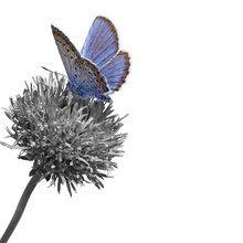 Canvasschilderij - Julius Butterfly - Colorsplash