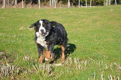 Gårdstunet Hundepensjonat: Deilig søndag med spreke og smilende hunder på tun...