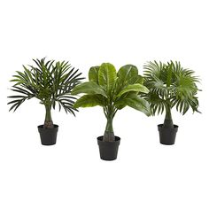 Nearly Natural Areca, Fountain And Banana Palm Artificial Tr.- Nearly Natural Areca, Fountain And Banana Palm Artificial Trees (Set Of Multi Nearly Natural Areca, Fountain And Banana Palm Artificial Trees (Set Of Multi - Artificial Hedges, Small Artificial Plants, Artificial Plant Wall, Artificial Flowers, Silk Plants, Faux Plants, Indoor Plants, Potted Plants, Patio Plants