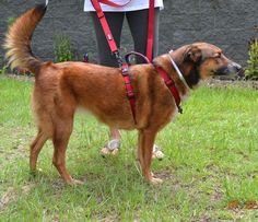 Ginger arrived August 9th and was adopted the very next day!!!