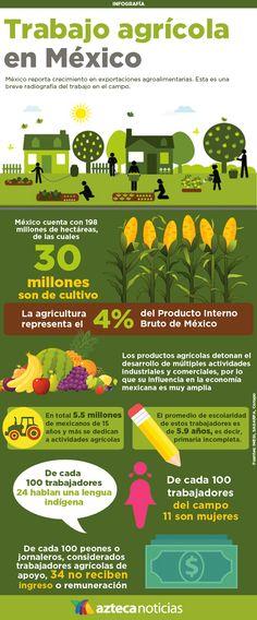 Trabajo agrícola en México #infografia
